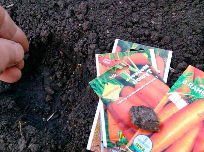 Какую морковь выбрать