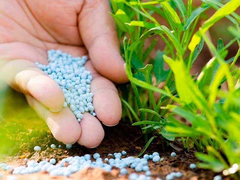 Как применять суперфосфат как удобрение на огороде и в саду: пошаговая инструкция