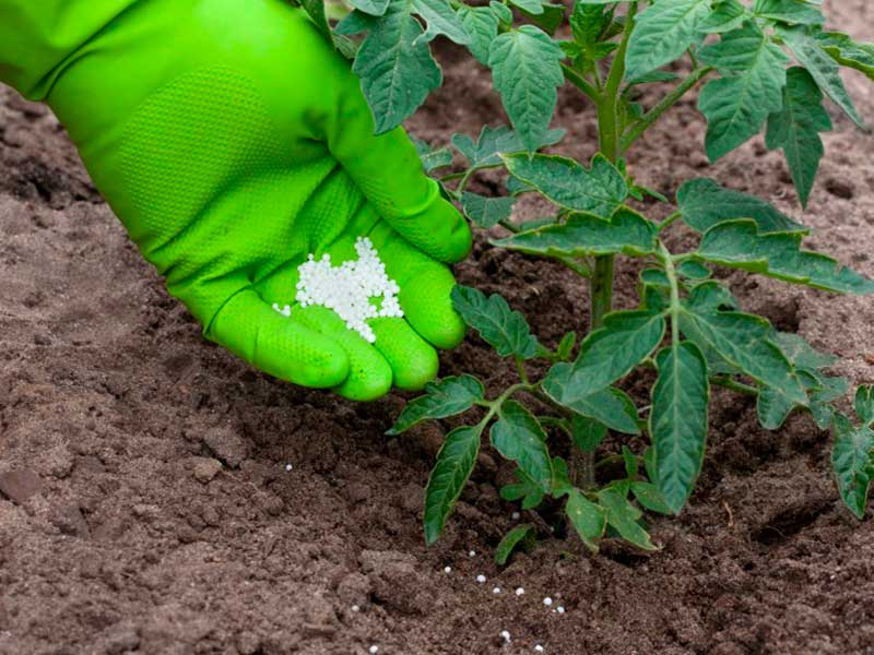 Применение суперфосфата на огороде