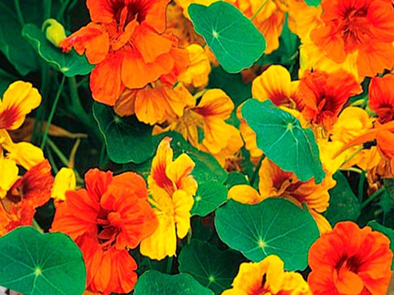 Какие цветы посадить летом на даче