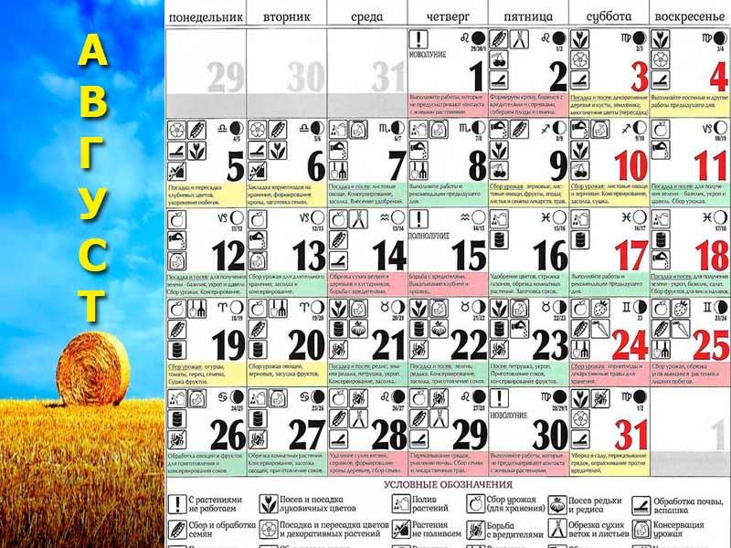 Лунный календарь садовода и огородника на август 2019