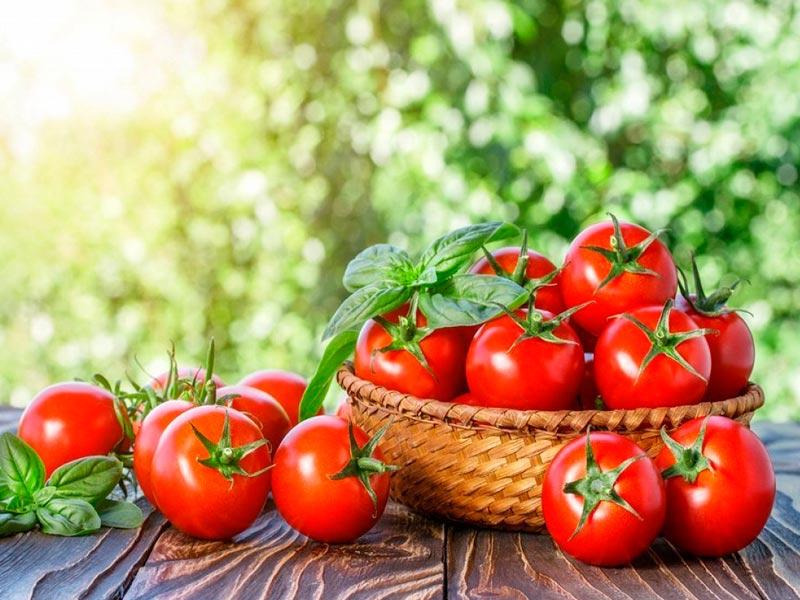 О пользе томатов