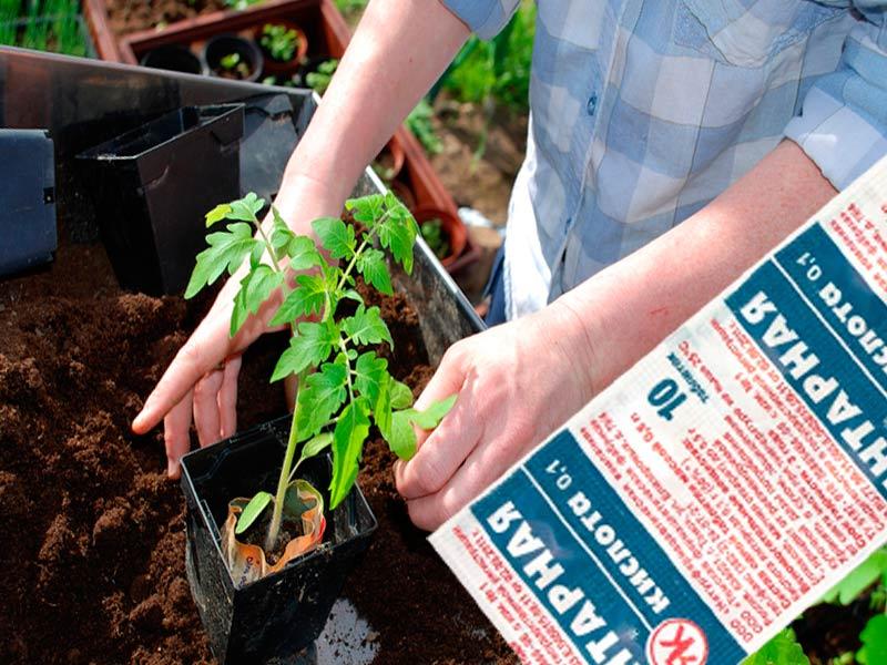 янтарная кислота инструкция для полива рассады томатов